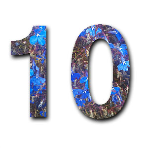 Ten Reasons
